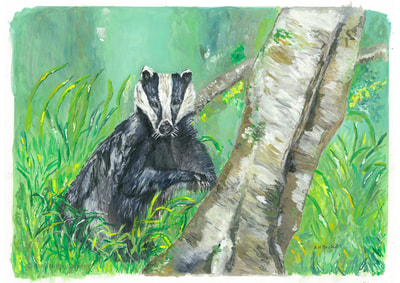 Woodland Badger
